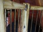 Handrail 016